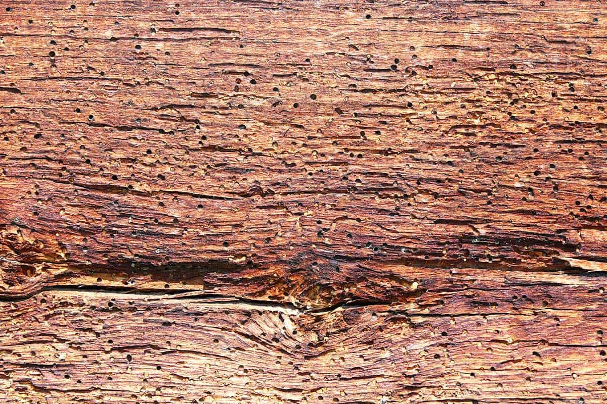 Wood with holes eating into it from termites.