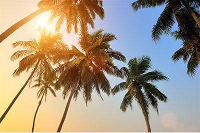 Palm Tree Spring Special Tempco Pest Control