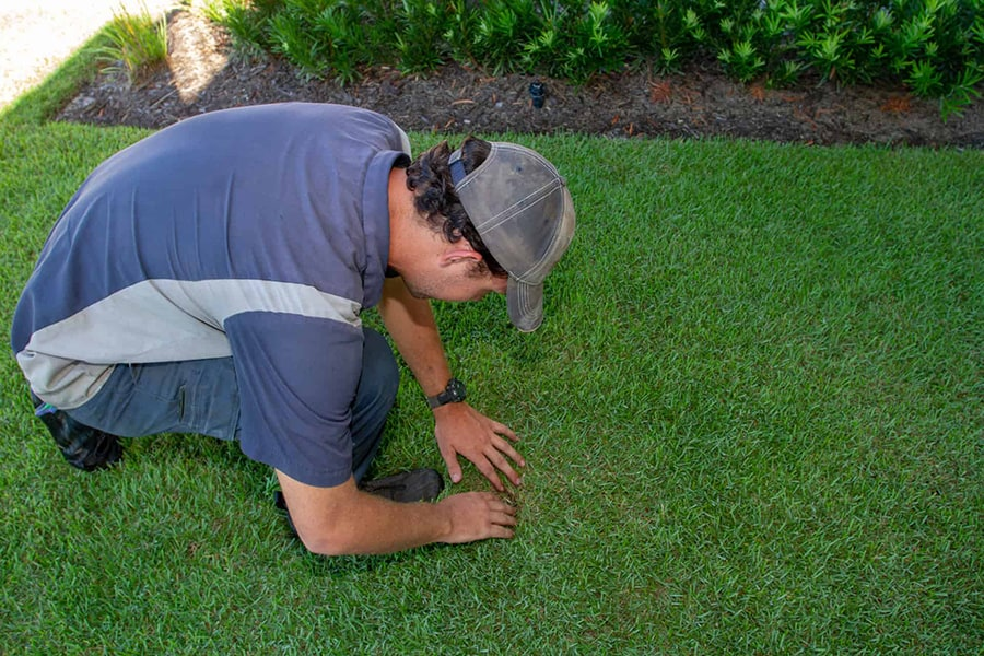 Tempco Lawn Care Tech inspecting clients lawns in Florida