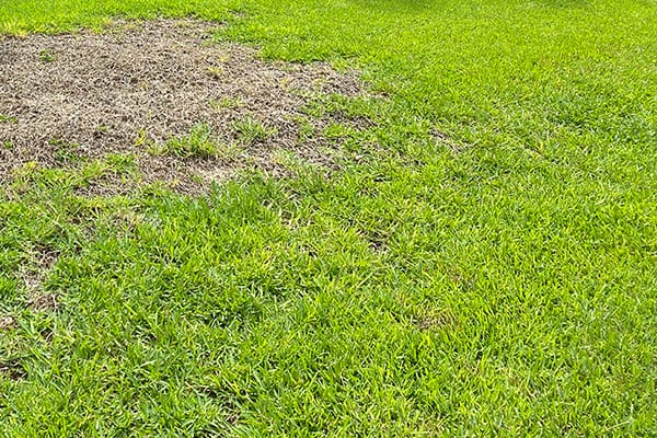 A lawn's green grass with a brown patch on it
